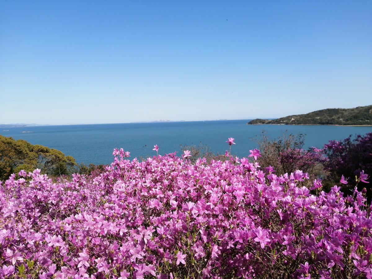 参道の展望台より海をのぞむ。ツツジのピンクと海のブルーのコントラストが美しい。2021/4/5撮影