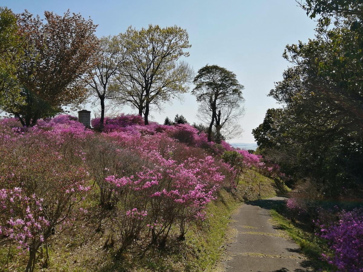 牛窓神社(亀山公園)のツツジが見頃を迎えています。(~15日頃まで)-5
