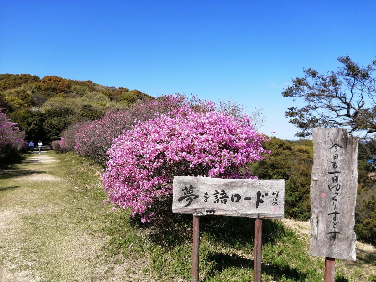 牛窓神社(亀山公園)のツツジが見頃を迎えています。(~15日頃まで)-2