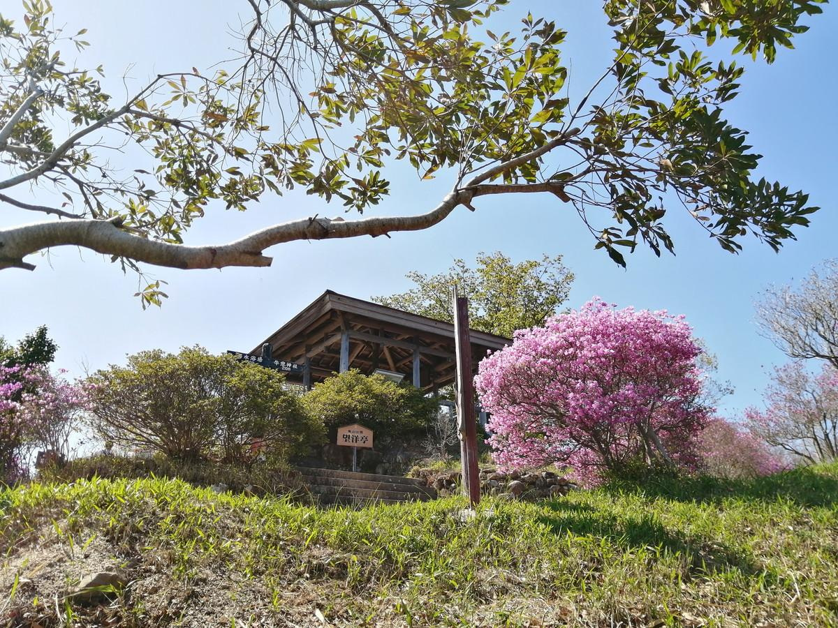 牛窓神社(亀山公園)のツツジが見頃を迎えています。(~15日頃まで)-4