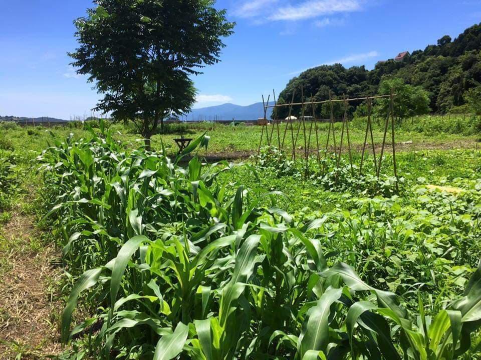 ポマイカイ農園-3
